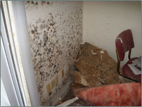 Mold in office