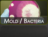 Mold and Bacteria Services